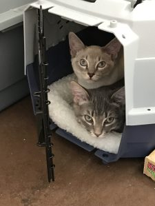 My cats, looking unimpressed by their carrier